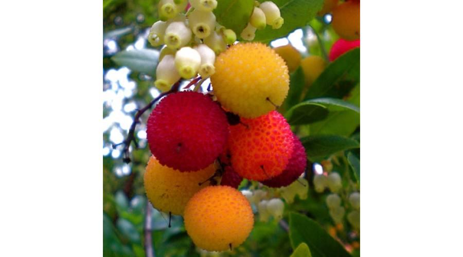 egzotikus dísznövények